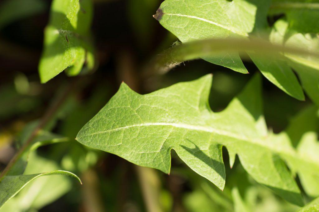 7 zielonych, super oczyszczających szejków
