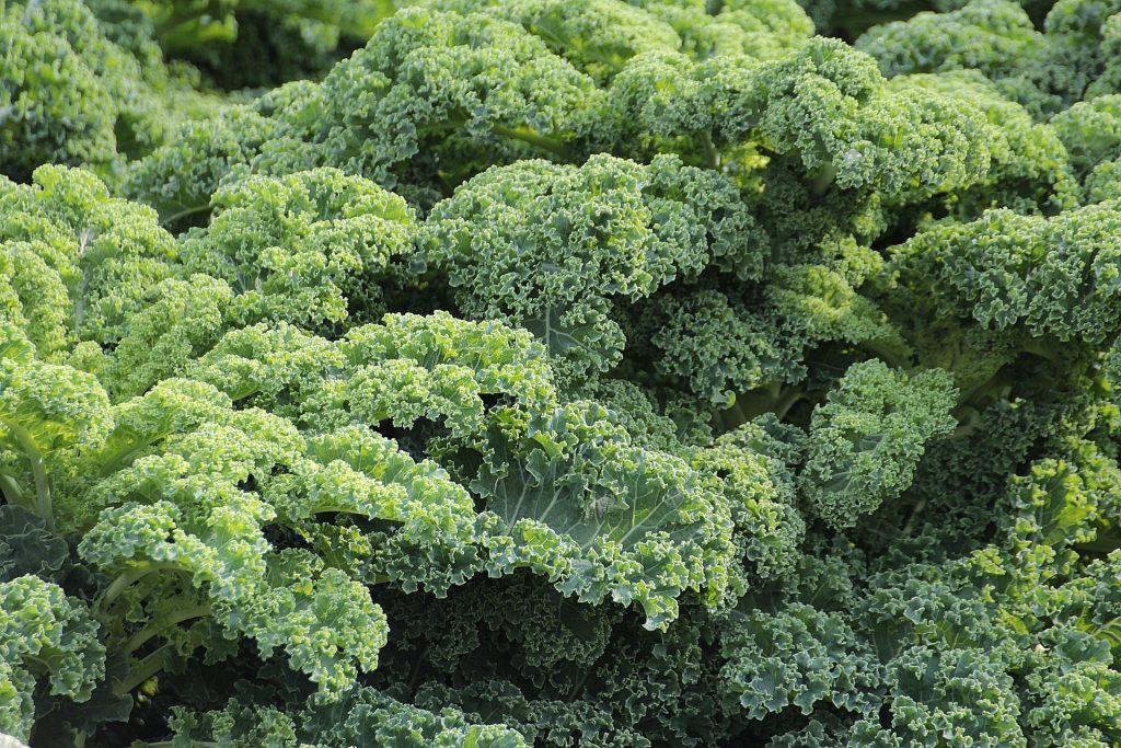 7 zielonych, super oczyszczających szejkow