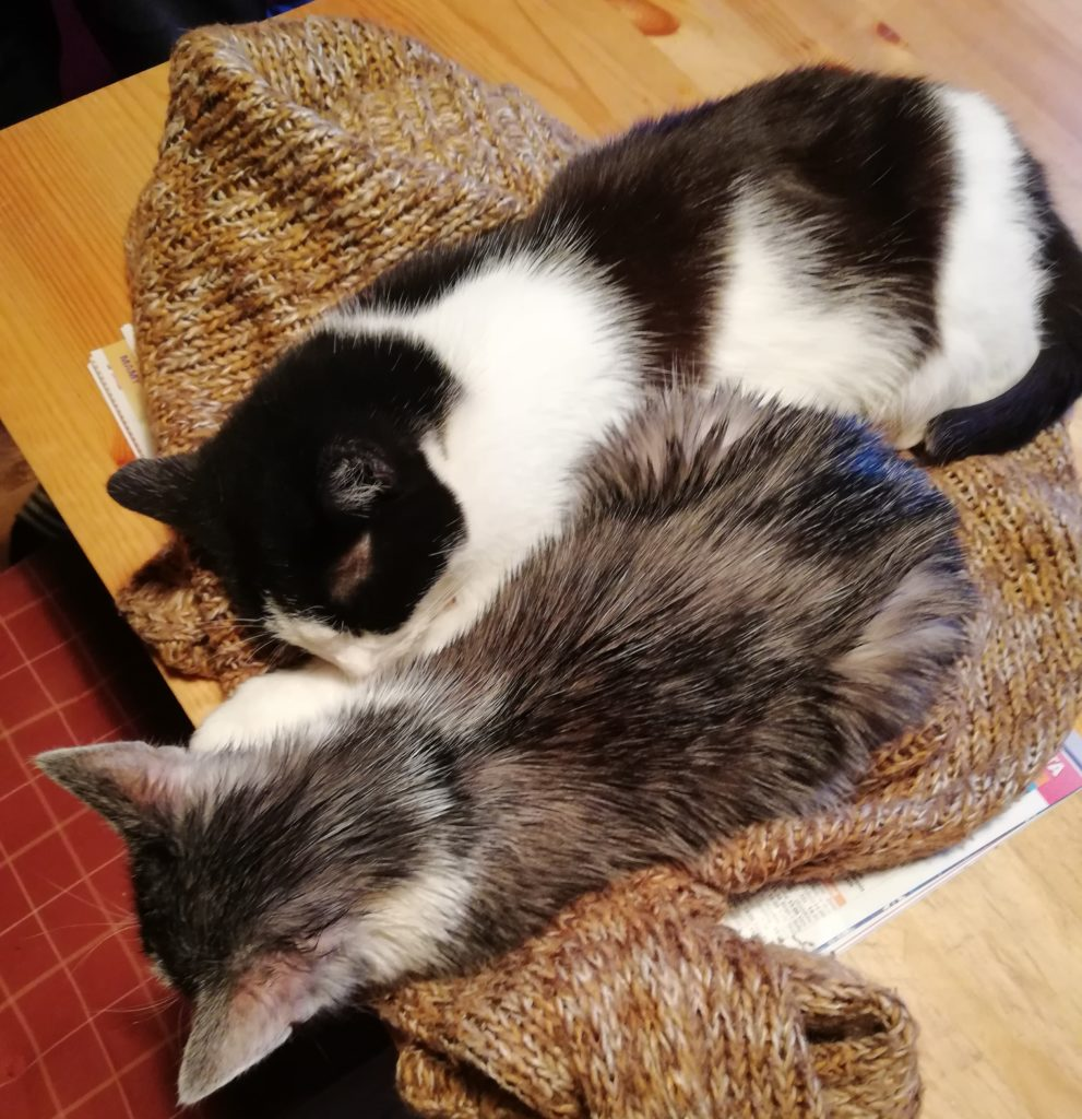 kot czy pies