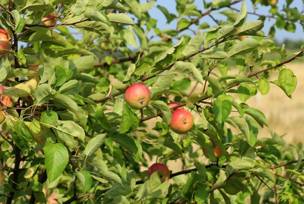top 6 owocow na schudniecie