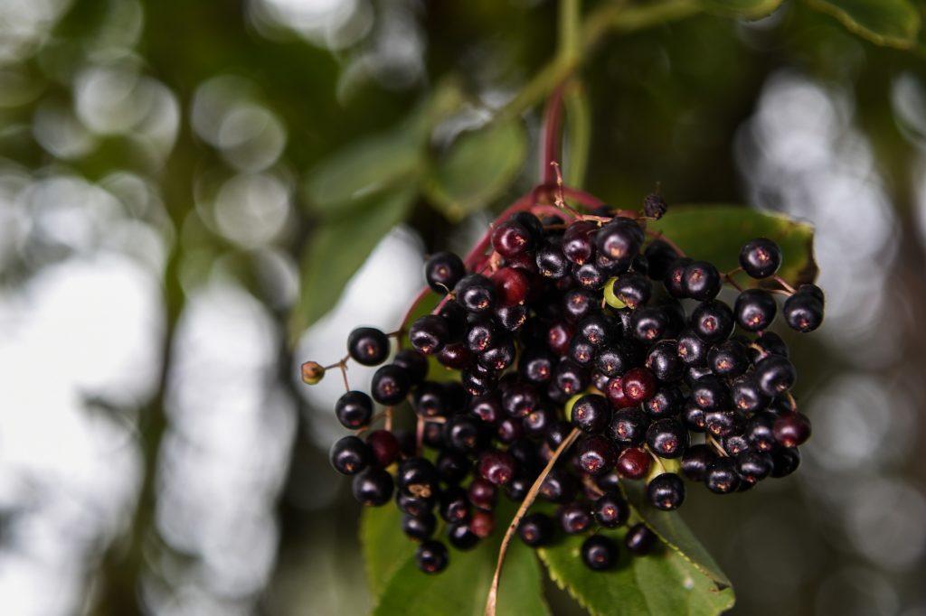 Z cyklu dzikie rosliny lecznicze