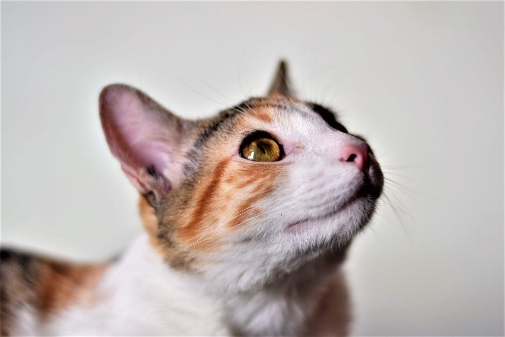 5 powodow, dla ktorych kot powinien byc twoim panem