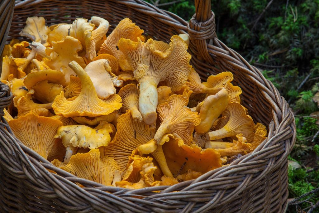 koszyk w lapke i na grzyby