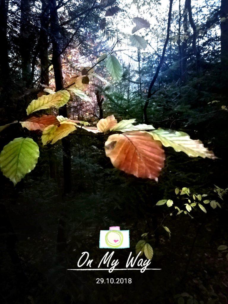 jesienny spacer w plomieniach lisci